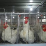 Poultry firm